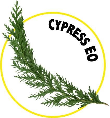 Cypress EO